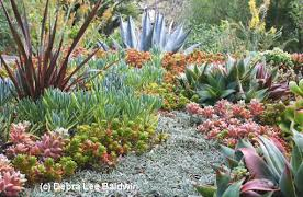 GROW LIKE A PRO- Succulents Seminar with Debra Lee Baldwin