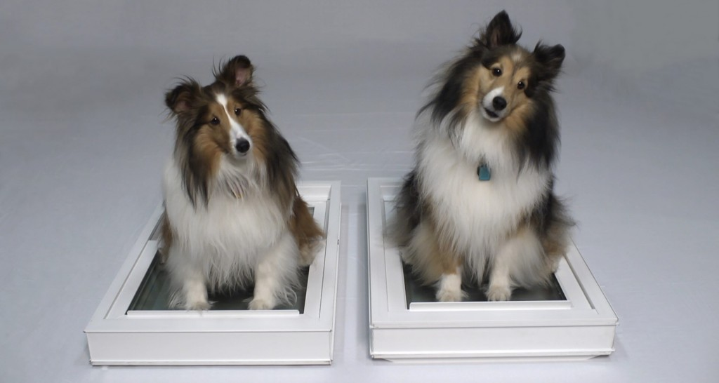 window world dogs