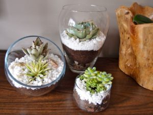 Gift ideas: Terrariums